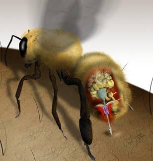 hvor meget honning giver et bistade